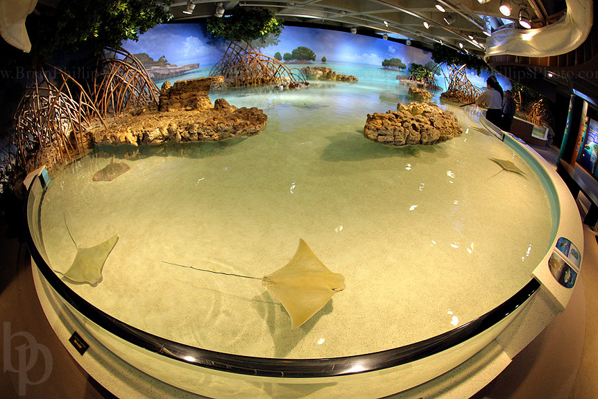 Search Results For Long Island Aquarium Shark Tank